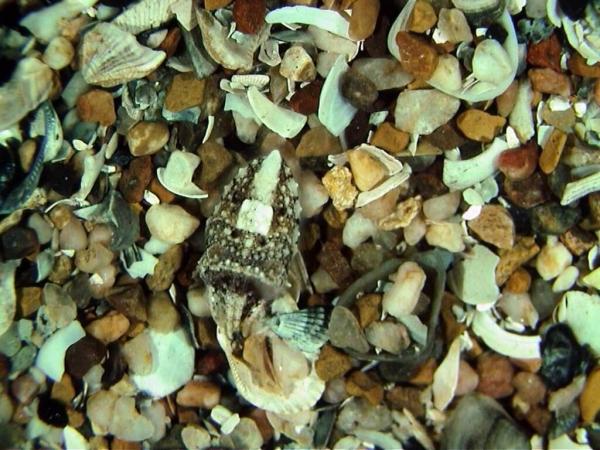 A. Seiche camouflée grâce à ses couleurs