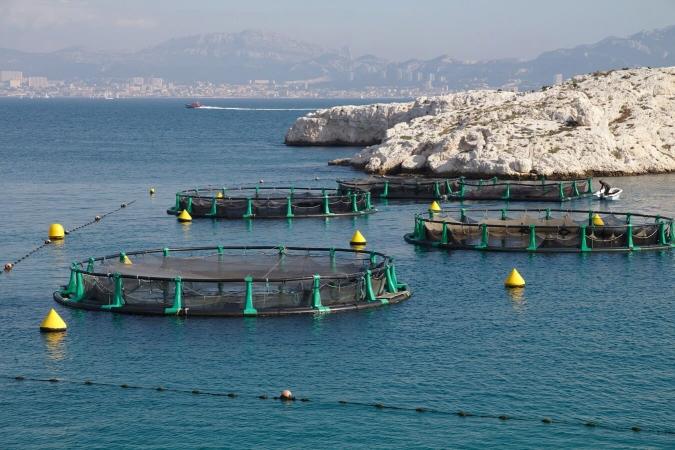 Aquaculture de loups bio