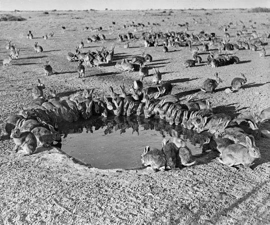 Archive australienne 1938
