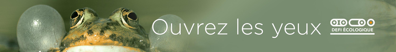 e-Gazette de DEFI-Écologique grenouille