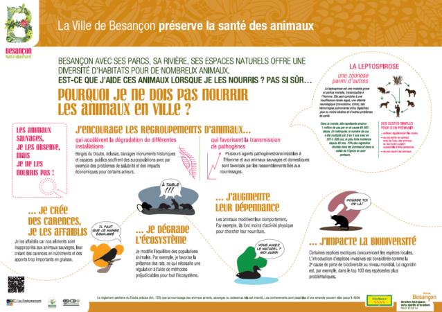 Besançon - Campagne de sensibilisation au nourrissage des animaux en ville