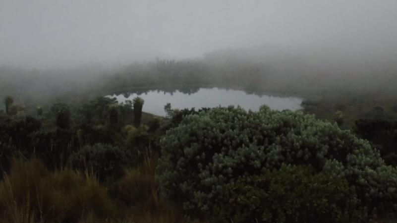 Brouillard sur une lagune du páramo du Parque Nacional de los Nevados, Colombie