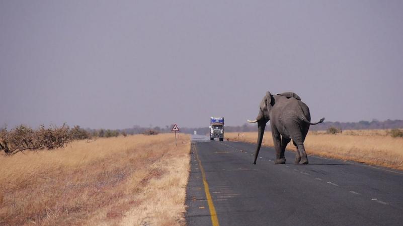 C'est l'éléphant qui traverse la route ou c'est la route qui traverse le territoire de l'éléphant ?