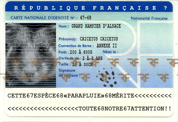 Carte d'identité du Grand hamster d'alsace (Cricetus cricetus)