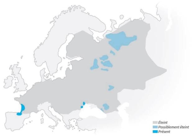 Carte de répartition du Vison d'Europe