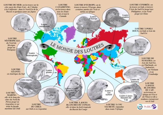 Carte des différentes espèces de loutres à travers le monde