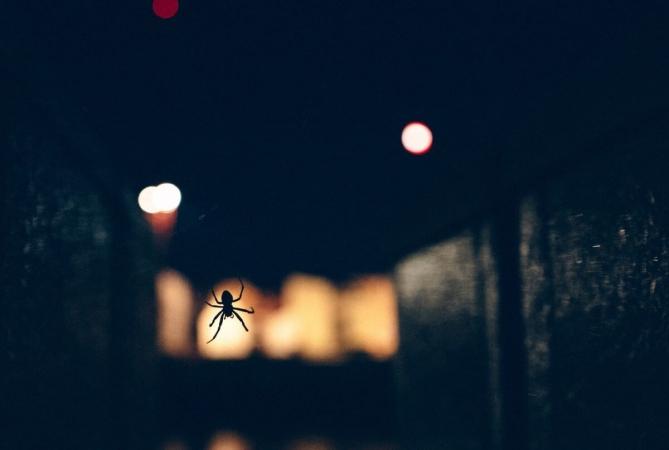 Du plus petit au plus grand animal, tous sont concerné par la lumière nocturne. Certaines araignées chassent plus facilement, d'autres sont plus facilement chassées