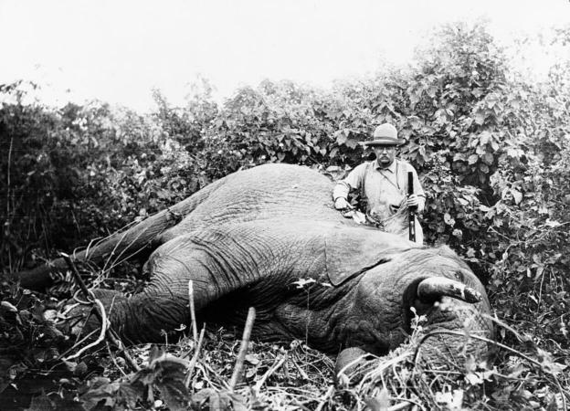 chasse à l'éléphant du président théodore Roosevelet