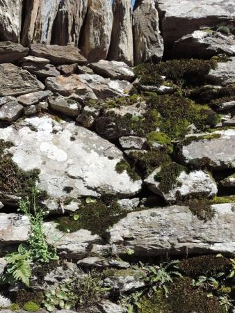Colonisation de lichens et mousse sur pierre sèche