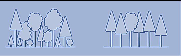 Comparaison schématique des structures des peuplements en futaie jardinée (gauche) et futaie régularisée (droite)