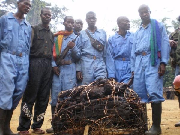 Crocodiles, antilopes et singes confisqué par les gardes de la réserve naturelle de Lomako-Yokokala