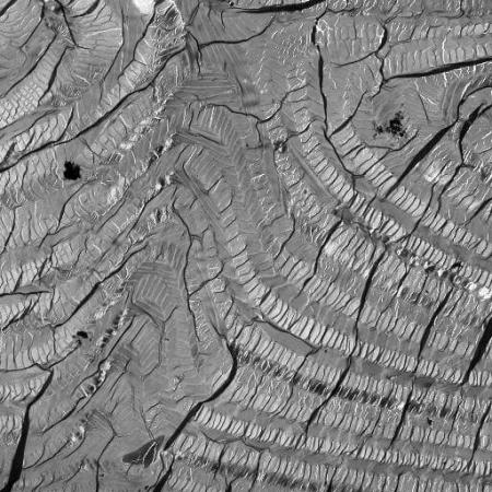 Cuticule de Pachyrrhynchus gemmatus purpureus en coupe transversale au microscope électronique