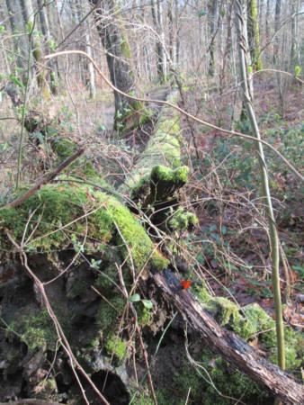 Ecosystèmes forestiers favorables aux tiques Ixodes : les arbres au sol favorisent la prolifération des rongeurs ; la couverture forestière et la litière de feuilles donnent aux tiques une humidité nécessaire à leur développement.