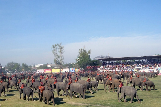 Elephant utilisé lors d'une énorme parade