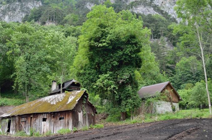 Énorme arbre à lierre, véritable réservoir verticale de biodiversité