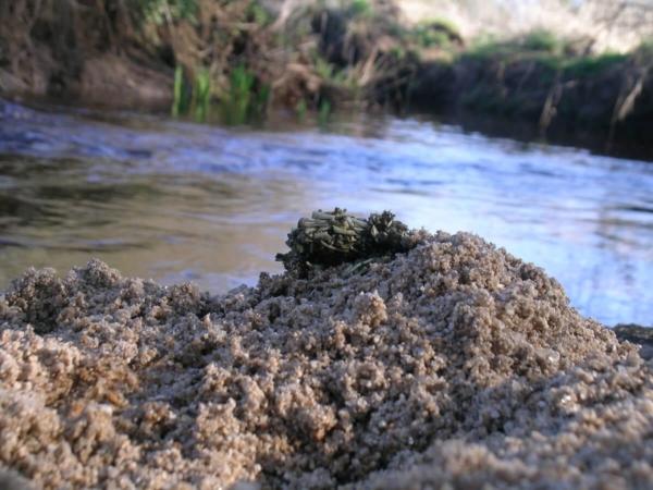 Epreinte de Loutre d'Europe, composée de petits os