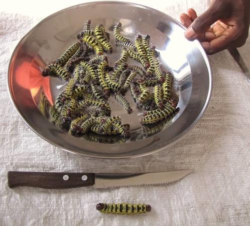 Et pourquoi pas enfin passer aux entomoprotéines ?