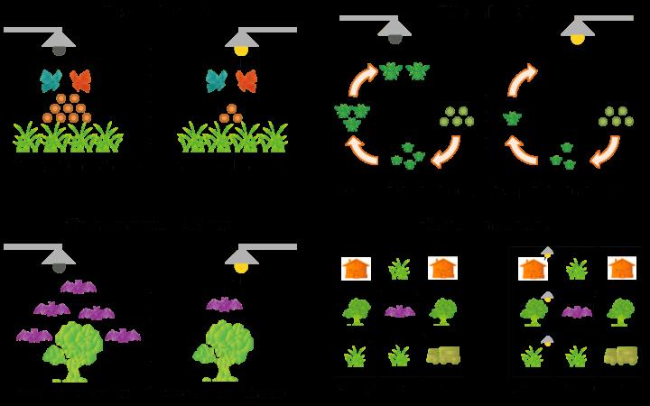 État du réseau écologique des chauves-souris avec et sans prise en compte de la pollution lumineuse