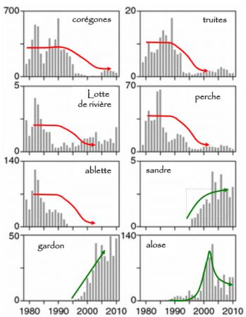 Evolution des populations de poissons dans le lac Majeur, modifié d'après Jeppesen et coll., 2012. (lien : 10.1007/s10750-012-1182-1)