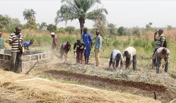 Exemple concret d'utilisation de Tithonia diversifolia au centre de formation de la Maison Familiale Rurale de Sokodé