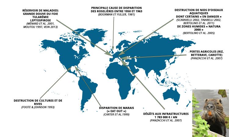 Exemples de publications et études scientifiques relatives aux impacts sanitaires, écologiques ou agro-économiques du ragondin au niveau mondial.