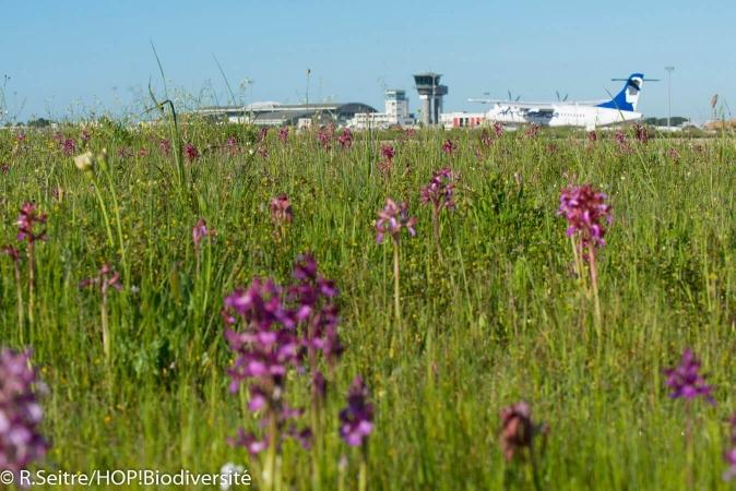 Flore variée sur fond d'avion et d'infrastructure aéroportuaire