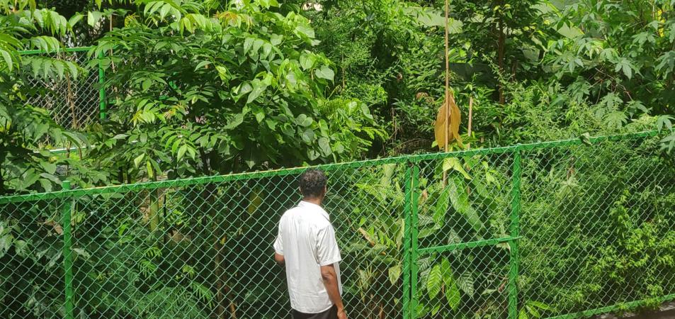 Forêt Miyawaki - 9 mois après la plantation
