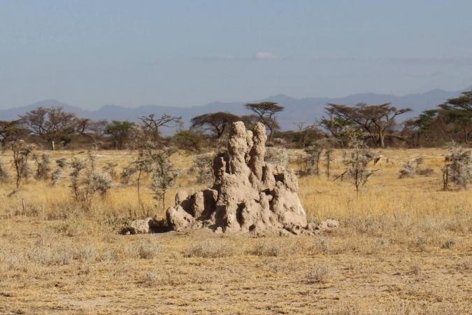 Fourmilière impressionnante de dédales à des fins de climatisation dans la Réserve Nationale de Shaba