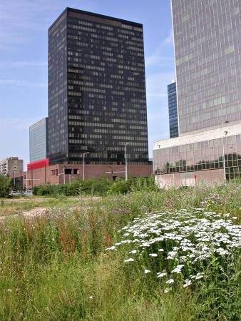 Friche urbaine à Namur en Belgique