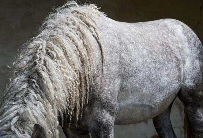 Frisures de cheval Curly