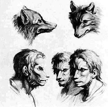 Gravures du traité de physionomonie de de Ch. Lebrun et Morel d'Arleux rapprochant l'Homme du loup