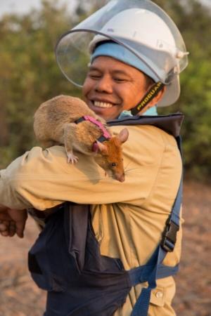 HeroRat entre deux recherches de mines au Cambodge