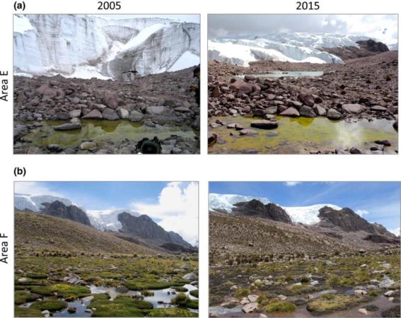Image répétée des étangs en Mars 2005 et Mars 2015. Pour la zone a, les images montrent l'apparition d'un nouvel étang ainsi que le recul du glaciers entre 2005 et 2015. Dans la zone b, l'étang est entouré de communautés développées de Distichia muscoides en 2005. En 2015 ces communautés de plantes coussins sont en déclin et remplacées par des graminées.