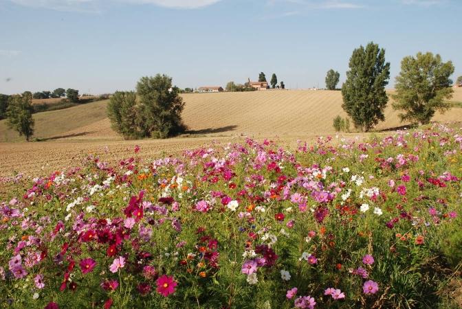 Jachère fleurie sur la commune de Mervilla