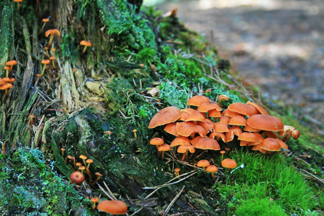 La forêt a son cycle où, à chaque étape, d'autres organisme prennent placent et joue leur rôle