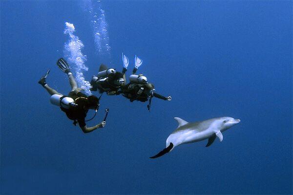 La tendance actuelle, à Rangiroa, est d'essayer de faire un selfie accroché aux dauphins