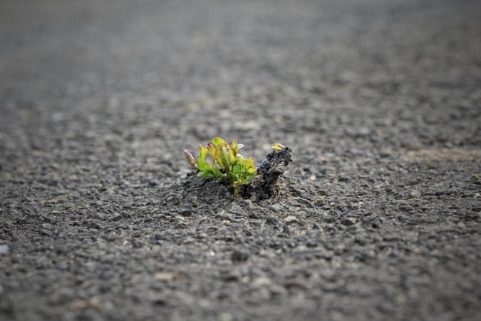 Laisser pousser…