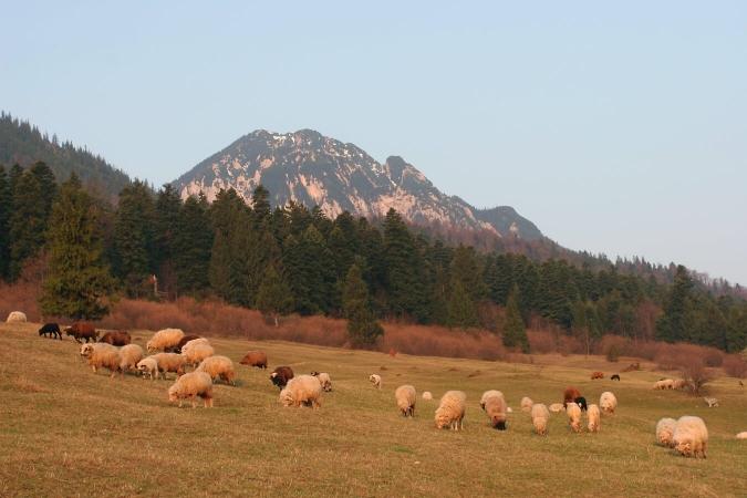 Le pastoralisme et les prédateurs.