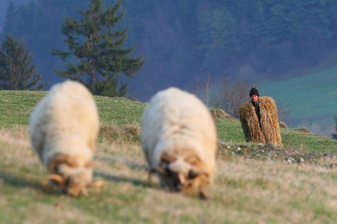 Le pastoralisme roumain, un exemple à suivre ?