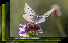 Preview de 10 magnifiques fonds d'écrans naturalistes