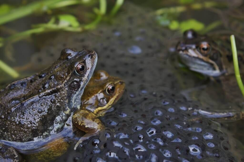 Preview de La reproduction dans le règne animal en images