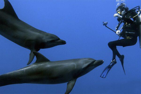 Les dauphins juvéniles sont naturellement explorateurs, à nous de les respecter en tant qu'animaux sauvages