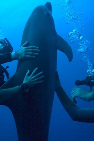 Les jeunes dauphins, conditionnés dès leurs premières semaines de vie, sont particulièrement vulnérables et développent des comportements déviants