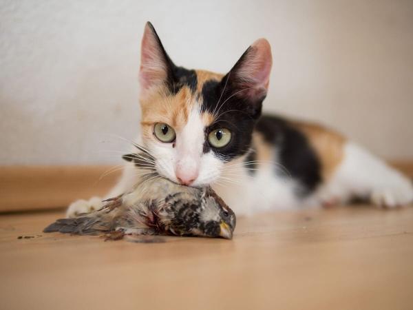 Les oiseaux sont des proies très amusantes pour les chats.