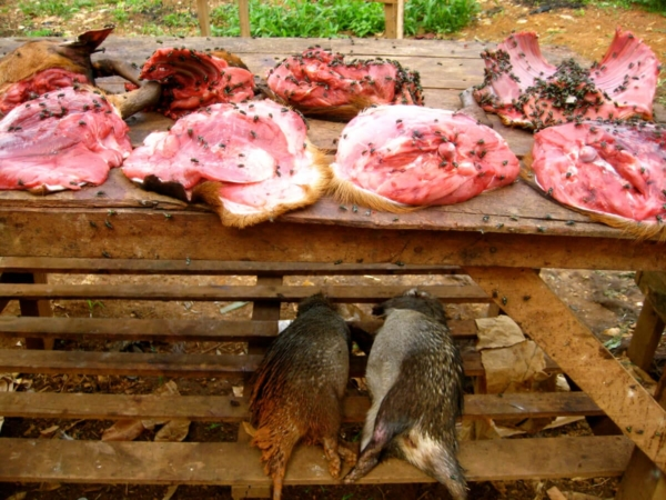 Les risques sanitaires liés à la consommation de viande de brousse sont nombreux
