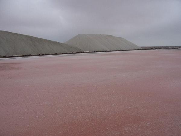 Les salins du midi en Camargues doivent cette couleur particulière à la Dunaliella salina