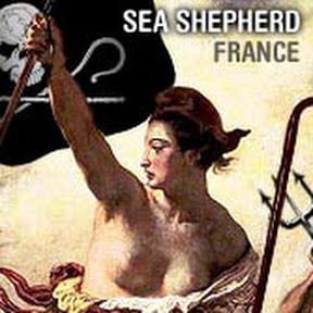 Chaîne YouTube France de l'ONG de protection des océan, Sea Shepherd France