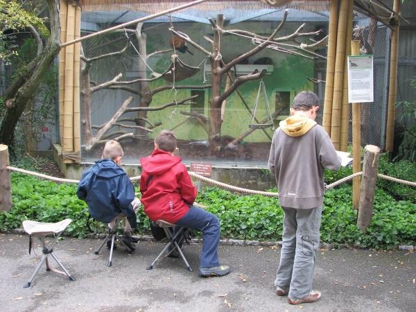 Plus qu'une simple séance de sciences, l'observation au zoo peut être une vraie leçon de respect du vivant.