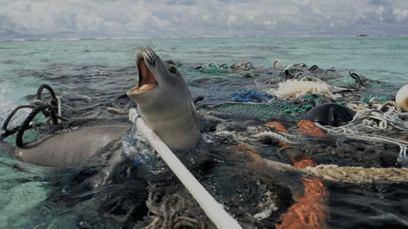 On peut de nouveau jeter ses emballages à la mer sans culpabiliser !