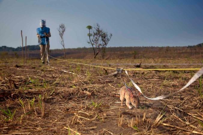 Opération de déminage en Angola